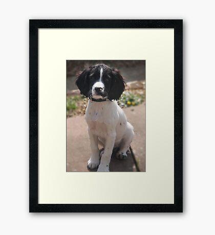 Benson at 12 weeks Framed Print