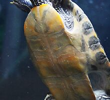 Turtle by Roxy J