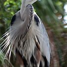 Great Blue Heron No.1 by Sheryl Unwin