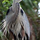 Great Blue Heron No.1 by Sheryl Unwin