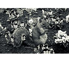 A squirrell in a flowerbed Photographic Print