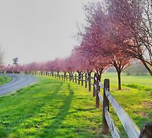 Along The Fence by James Brotherton