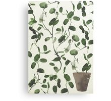 Hoya Carnosa / Porcelainflower Canvas Print