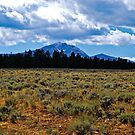 Mountains and Sage by Bryan D. Spellman
