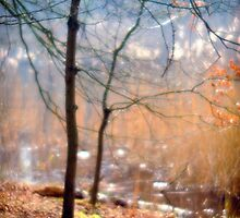 Soft Forest by WillOakley