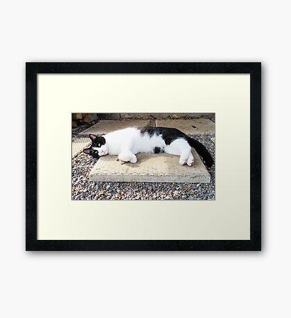 Basking in the Sunshine Framed Print