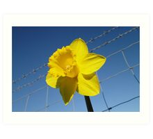 Daffy On The Safe Side Of The Fence Art Print