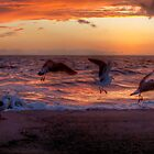 Seascape_C6416 by sasakistudio
