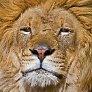 King of the Jungle by Anthony Roma