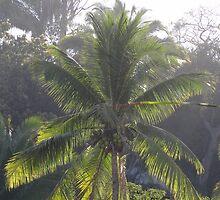 Palm Trees In The Morning Light - Palmas En La Luz De La Mañana by Bernhard Matejka
