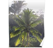 Palm Trees In The Morning Light - Palmas En La Luz De La Mañana Poster