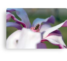 Pink Seduction Canvas Print