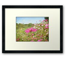Cosmos in the field Framed Print
