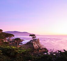 The Lone Cypress by Surentharan Murthi