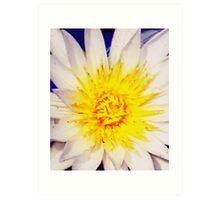 Heart of a water lily Art Print