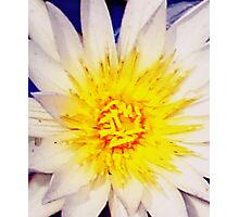 Heart of a water lily Photographic Print
