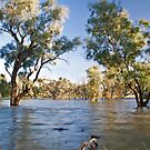 Rising Flood Waters by Anna Ryan