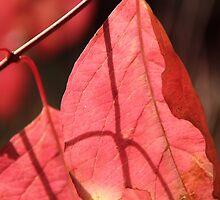 Leaf Shadow by azphotographydd