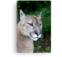 Portrait Of A Puma Canvas Print