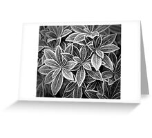 Ice Edged Greeting Card