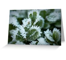 Frost Fingers Greeting Card