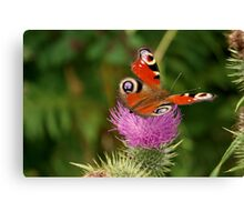 Delicate butterfly on threatenting thistle Canvas Print
