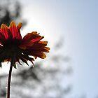Hope by Bill Colman