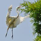 Freebird by Kathy Baccari