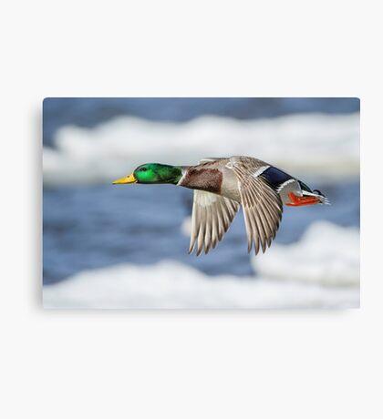 Bye Bye Birdie Canvas Print