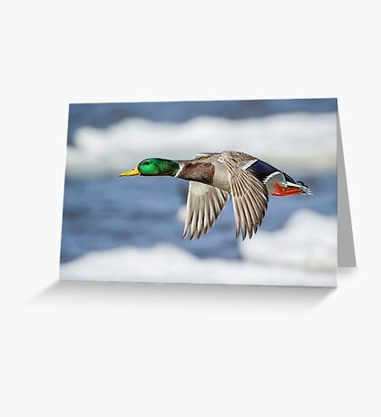 Bye Bye Birdie Greeting Card