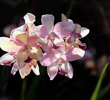 Backlit Orchids by Rosalie Scanlon