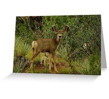 Mule Deer Raspberry Greeting Card