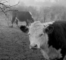 Cows in the Mist by Theodore Kemp