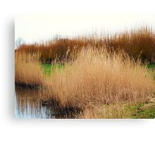 watery willow  Canvas Print