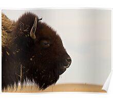 Badlands Bison Poster