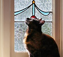 I'll find the sun. by Jeanette Varcoe.