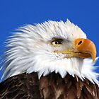 Eagle Portrait by Mike Shero
