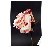 With Petals like Paper Poster
