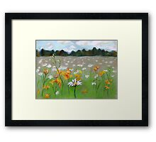 Camomile field. Framed Print