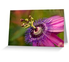Passion flower in pink and purple Greeting Card