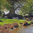 The sheep dip by almaalice