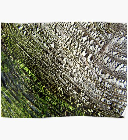 Mossy stump Poster
