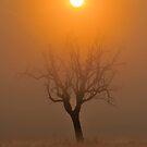 Solar Deity by Kasia Nowak