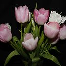Pink & White Tulips by AnnDixon