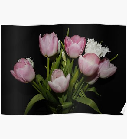 Pink & White Tulips Poster