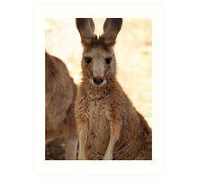 Kangaroos up Close Art Print