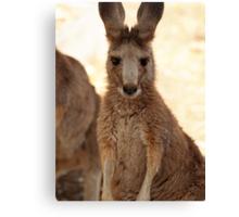 Kangaroos up Close Canvas Print