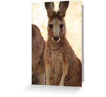 Kangaroos up Close Greeting Card
