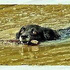 awwww dog by Maree Cardinale