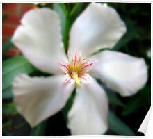 Edited Flower Poster